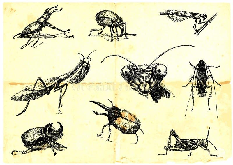 Kevers en insecten vector illustratie