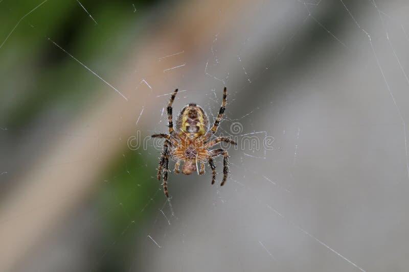 Kevers, spinnen, insecten stock foto