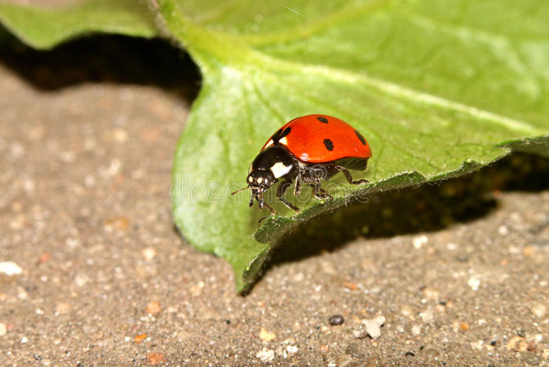 Kevers, spinnen, insecten stock foto's