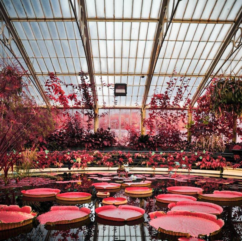 Kew庭院红外线的百合池塘 免版税库存图片