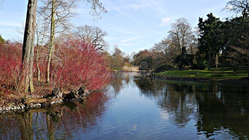 Kew植物园的湖在大伦敦英国 图库摄影