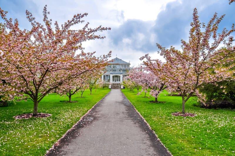 Kew botanical garden in spring, London, UK royalty free stock images