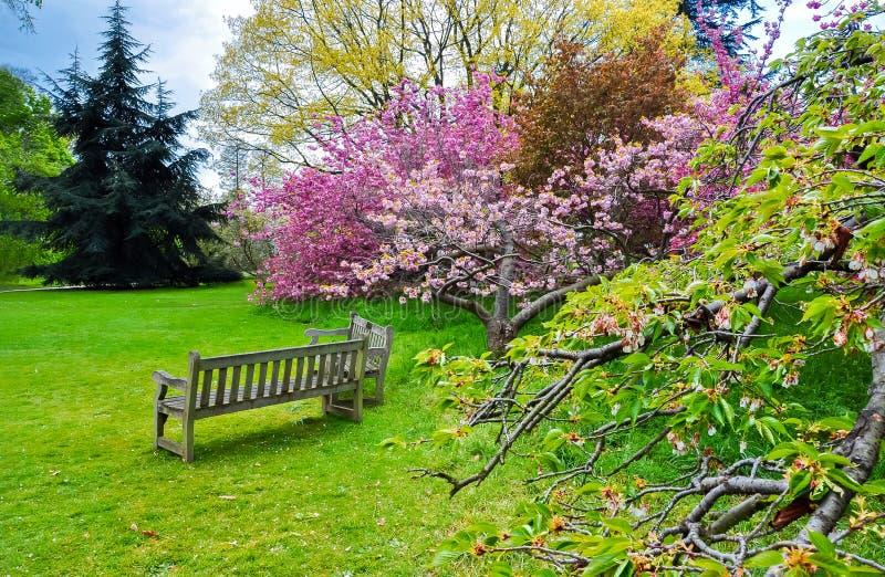 Kew botanische tuin in de lente, Londen, het Verenigd Koninkrijk royalty-vrije stock foto