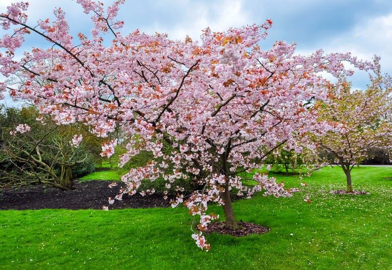 Kew botanisk trädgård i våren, London, Förenade kungariket arkivbild