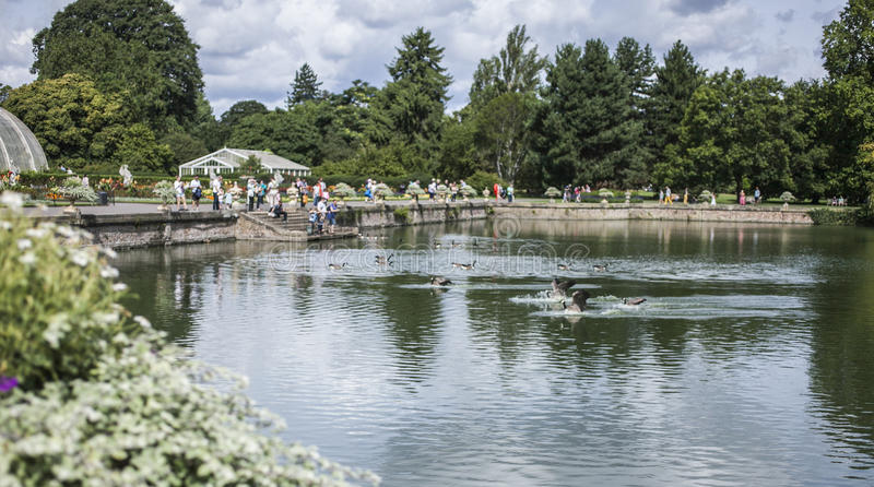 Kew Gardens in London, the pond. stock images