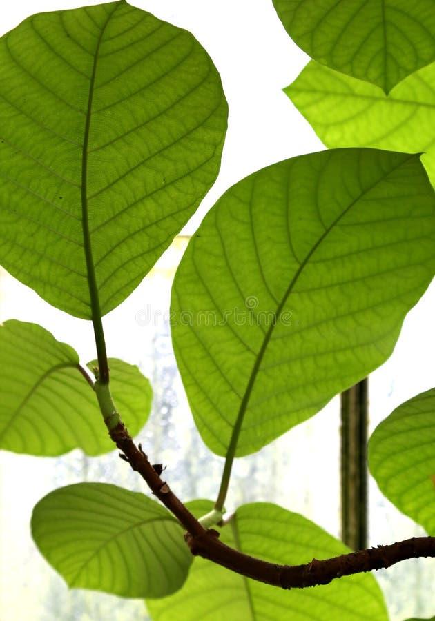 Kew Koninklijke Botanische Tuinen, Unesco-Erfenisplaats, Kew-West-Londen, Botanische tuinen royalty-vrije stock foto
