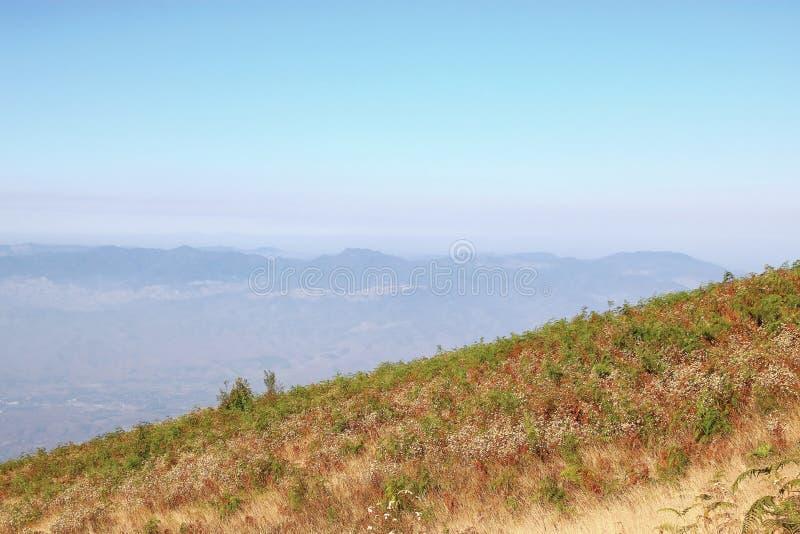 Kew Mae平底锅在土井Inthanon国家公园的自然痕迹黄色草甸风景, Chaing Mai,泰国 库存照片