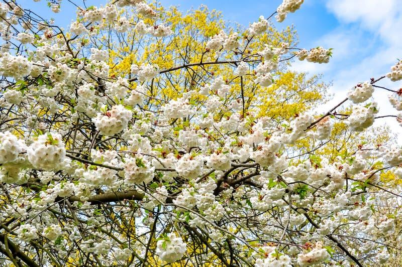 Kew ogród botaniczny w wiośnie, Londyn, Zjednoczone Królestwo obrazy stock