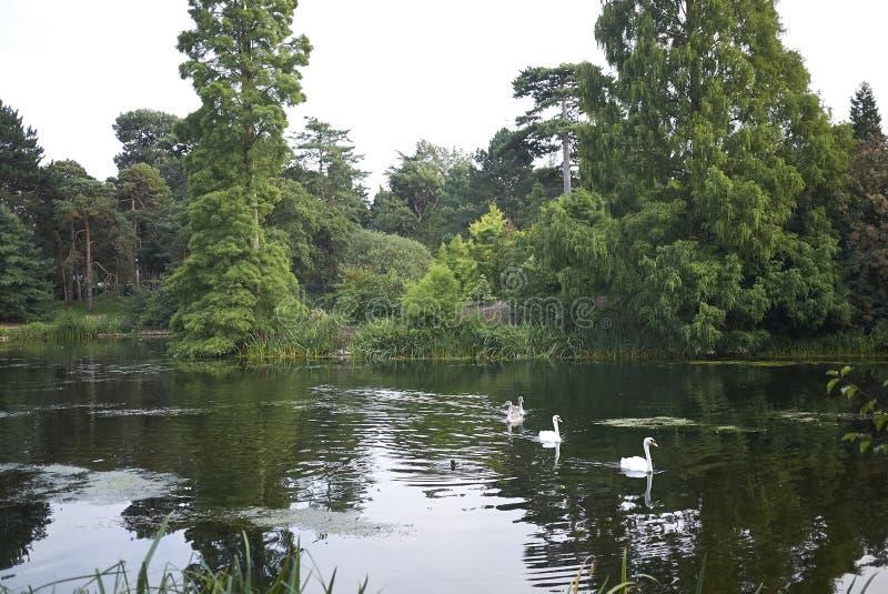 Kew ogródy jeziorni fotografia royalty free