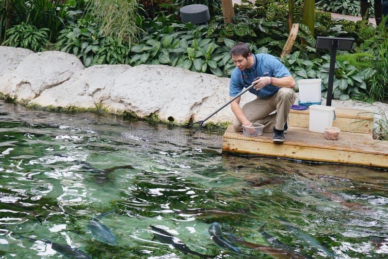 Key West-Fisch-Fütterungsshow lizenzfreies stockbild