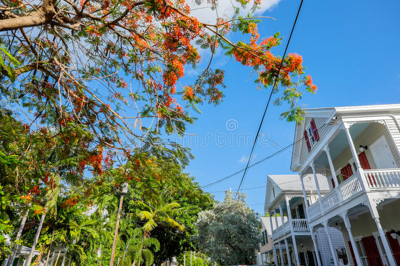 Download Key West homes stock photo. Image of town, community - 41982708