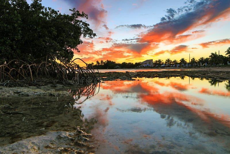 Key West-Zonsondergang - de Sleutels van Florida - Bezinningen in Mangroven royalty-vrije stock afbeelding