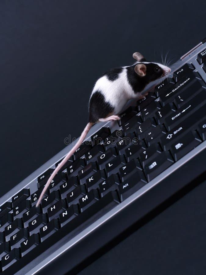 Keybord en muis royalty-vrije stock foto