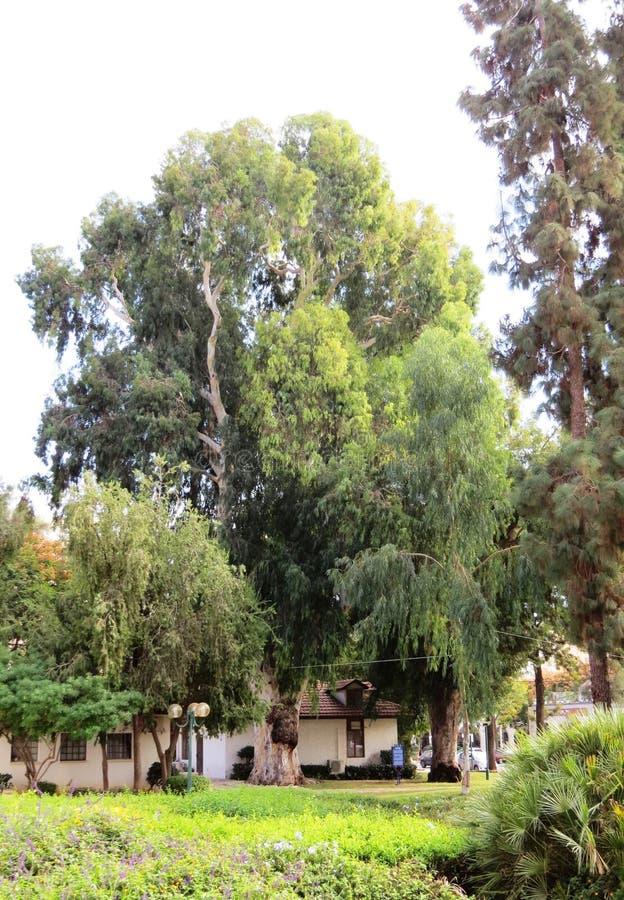 Kfar Saba royalty free stock images