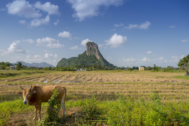 Khao Aok talu. Mountain is landmark in Phatthalung province name Khao Aok talu The Hole Mountain with cow royalty free stock photography