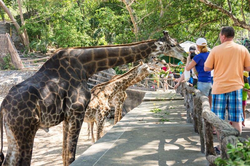 Khao Kheow开放动物园在芭达亚 免版税库存照片