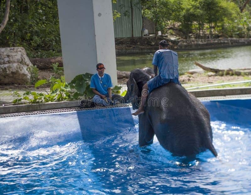 Khao Kheow开放动物园 教练沐浴大象 库存图片