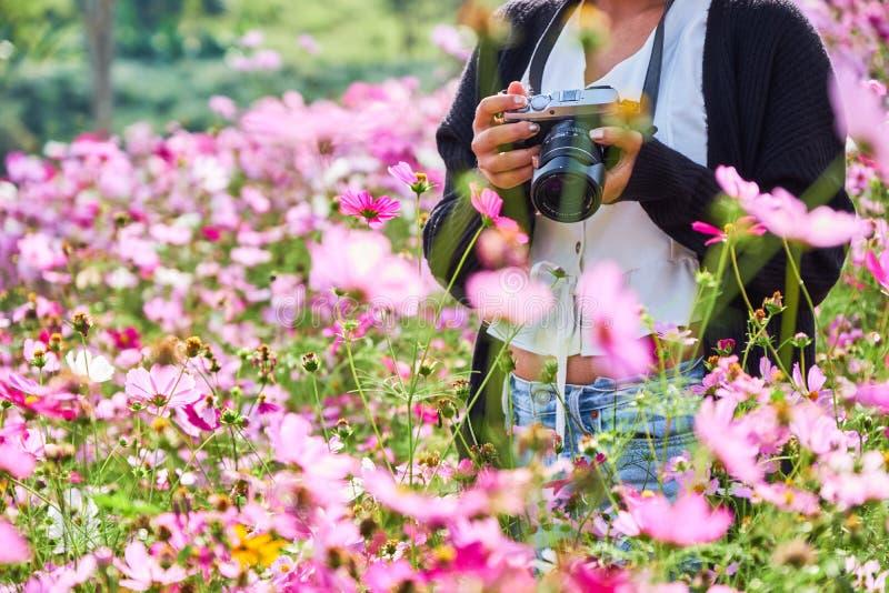 Khao-kho Phetchabun, Thaiand Touristische Reise der Frau machen Foto mit Kamera auf schönem Kosmosblumenfeld lizenzfreie stockfotografie