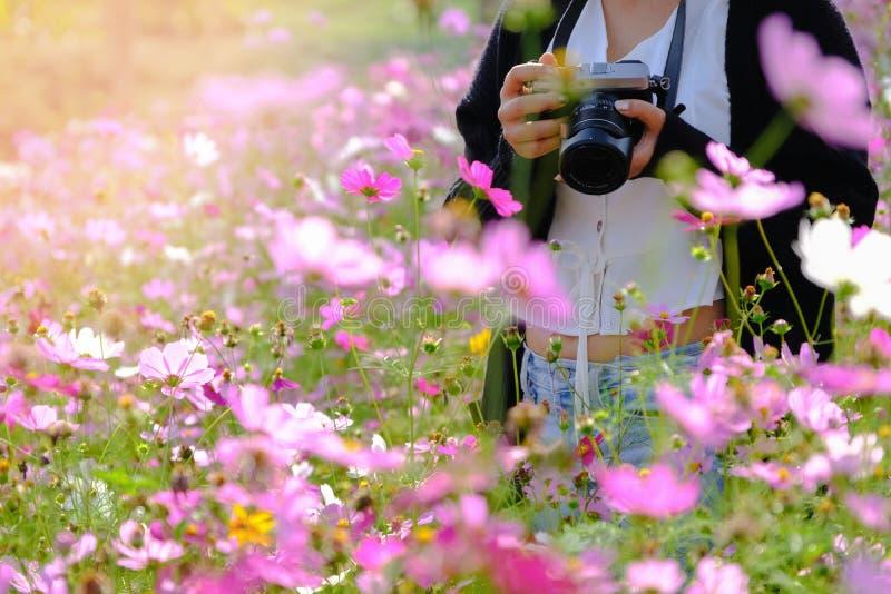 Khao-kho Phetchabun, Thaiand Touristische Reise der Frau machen Foto mit Kamera auf schönem Kosmosblumenfeld lizenzfreies stockfoto