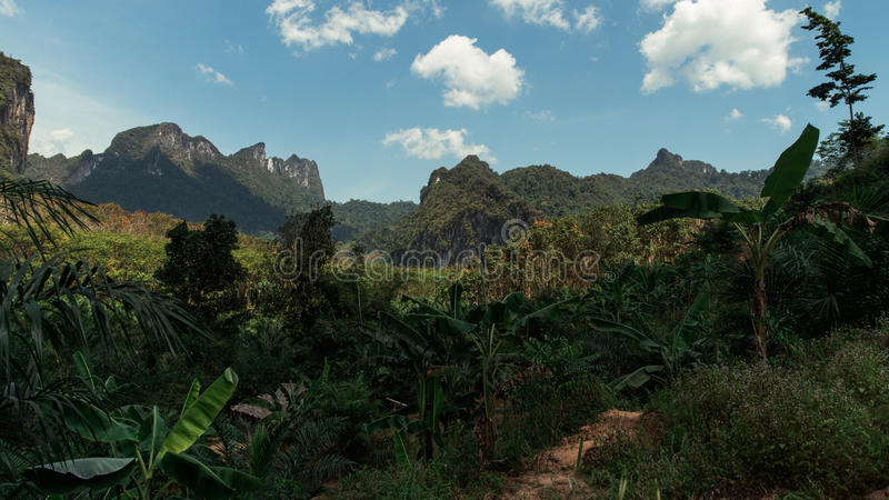 Khao Sok Jungle in Thailand. South East Asia royalty free stock photo