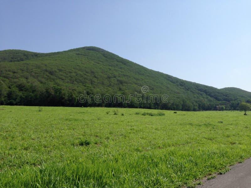Khaoyai photo stock