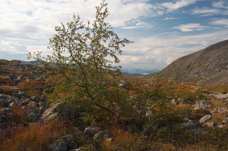 The Khibiny Mountains royalty free stock photo