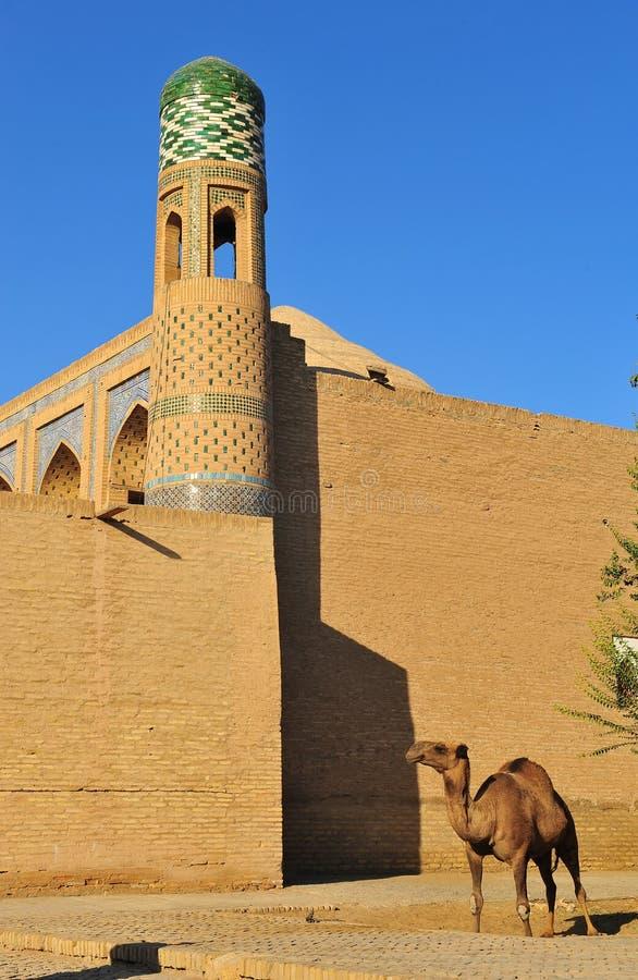 Khiva: cammello davanti alla parete immagine stock libera da diritti