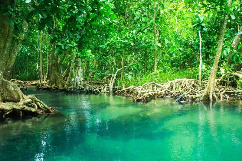 Khlong sång Nam, krabi, Thailand arkivfoto