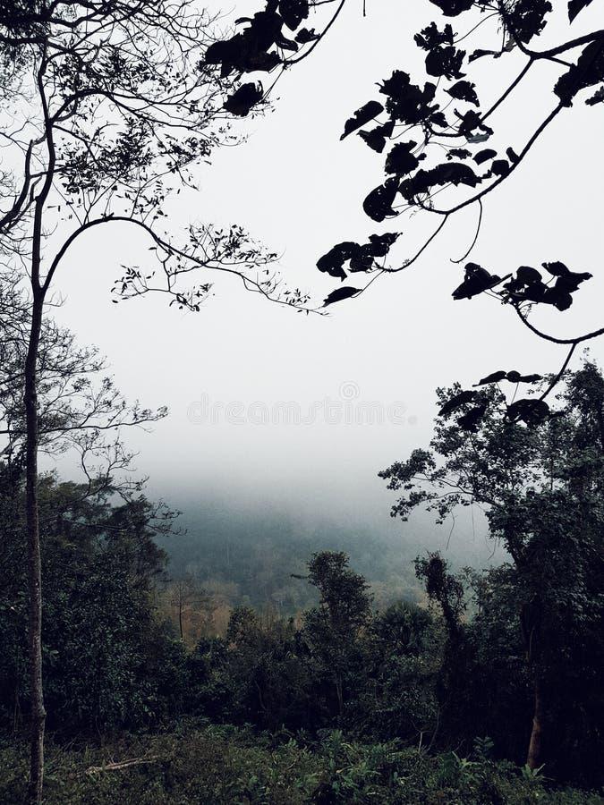 Khoa亚伊国家公园,泰国 图库摄影