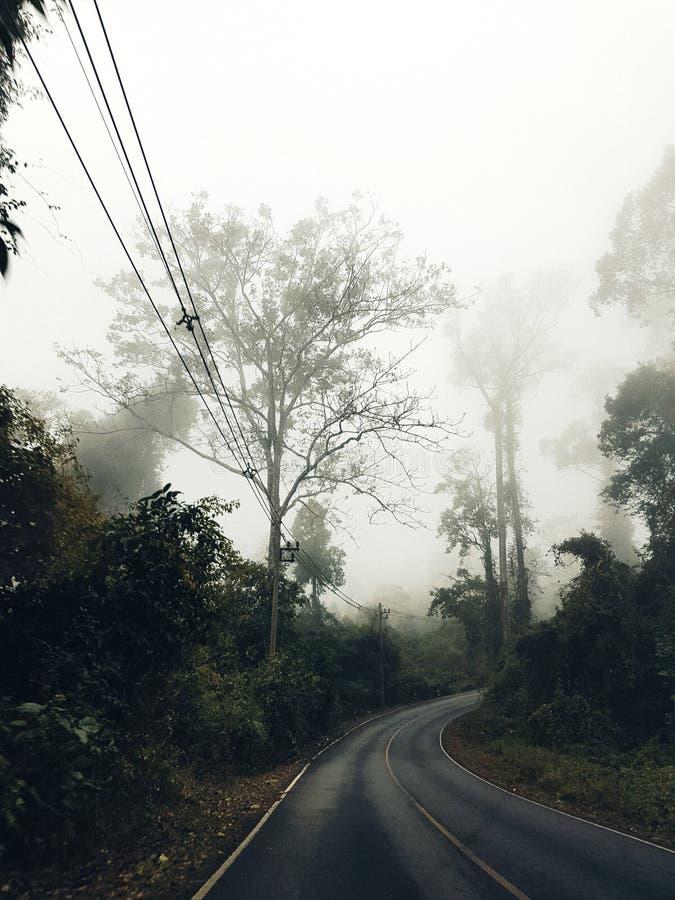 Khoa亚伊国家公园,泰国 库存图片