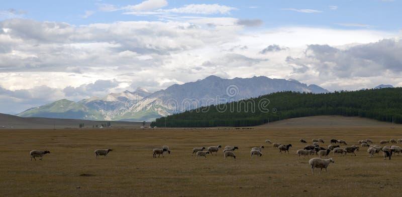 Khoridol Saridag berg och betesmark arkivbilder