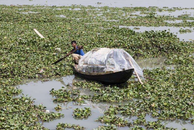 Khulna Bangladesh, Februari 28 2017: Man rodden med ett litet träfartyg på en flod mycket av vatten- växter nära Khulna royaltyfri fotografi