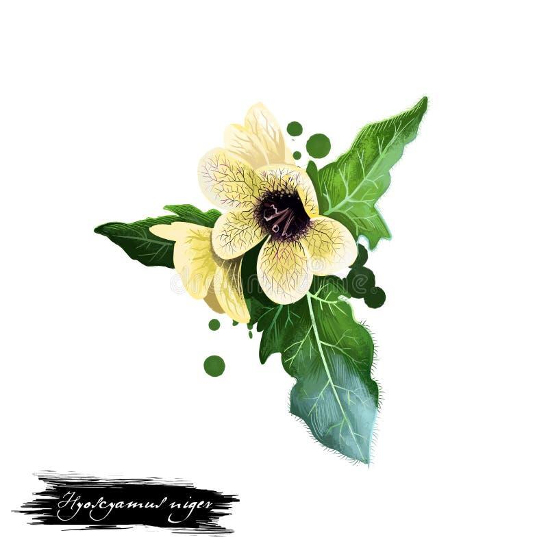 Khurasani-ajwain - ayurvedic Kraut Hyoscyamusnigers, Blüte digitale Kunstillustration mit dem Text lokalisiert auf Weiß Gesundes  lizenzfreie abbildung