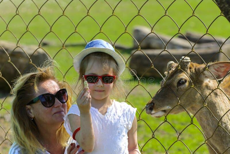 Khust, Ukraine - 28 avril 2018 Une petite fille alimente un jeune dee photographie stock
