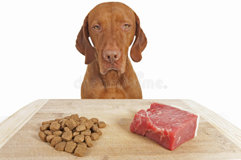 Download Kibble or natural dog food stock photo. Image of board - 29013908