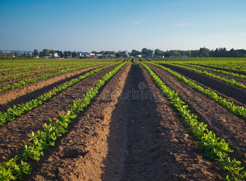 KibbutzNaan fält som på våren planteras royaltyfria bilder