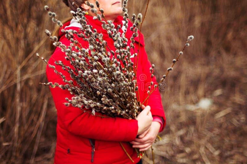 Kici wierzba rozgałęzia się z błękitnym tłem Piękna kicia zdjęcia stock