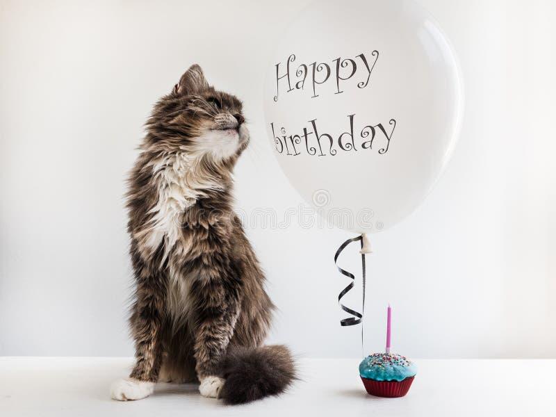 Kiciuni i helu balon z urodzinowymi powitaniami fotografia royalty free