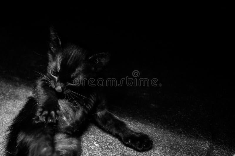 Kiciunia Czarny kot kłama puszek na podłoga obraz stock