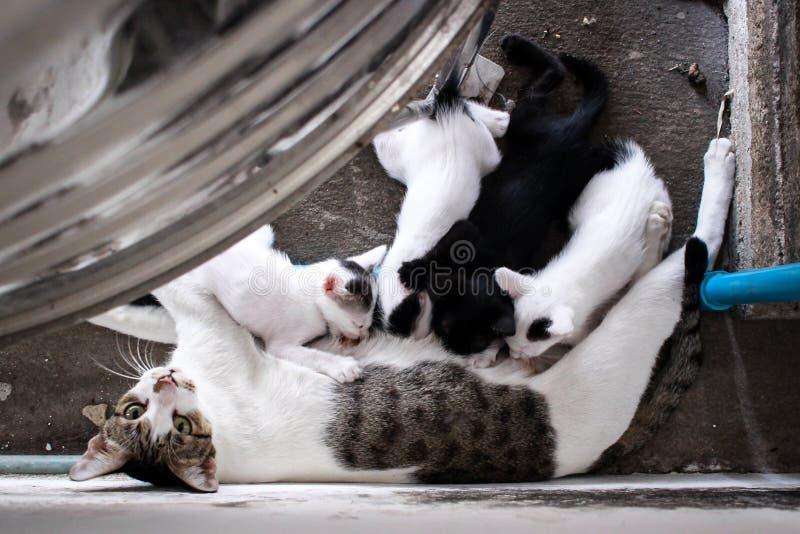 Kiciunia kot kłama puszek na podłoga z mamą fotografia royalty free