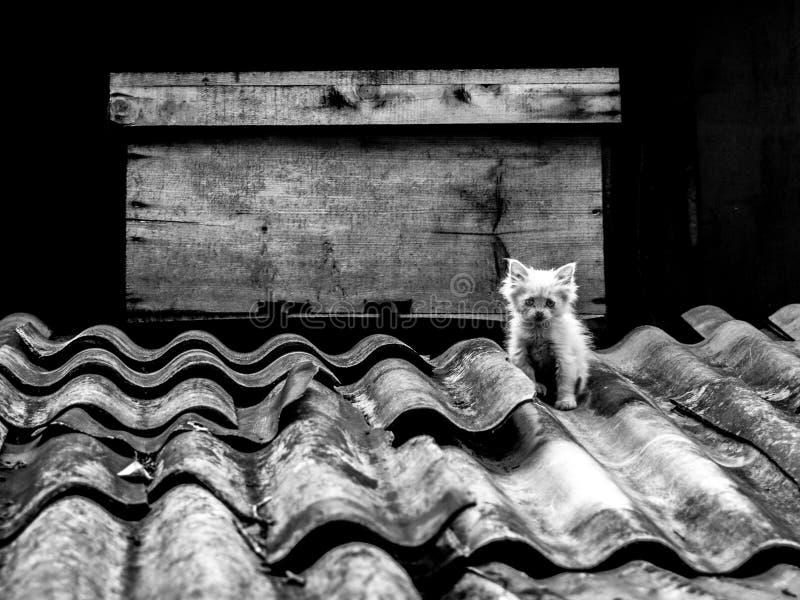 Kiciunia na dachu obraz royalty free
