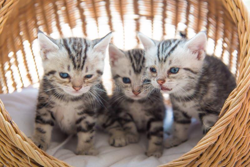 Kiciunia na zwierzęcia domowego łóżku zdjęcia stock