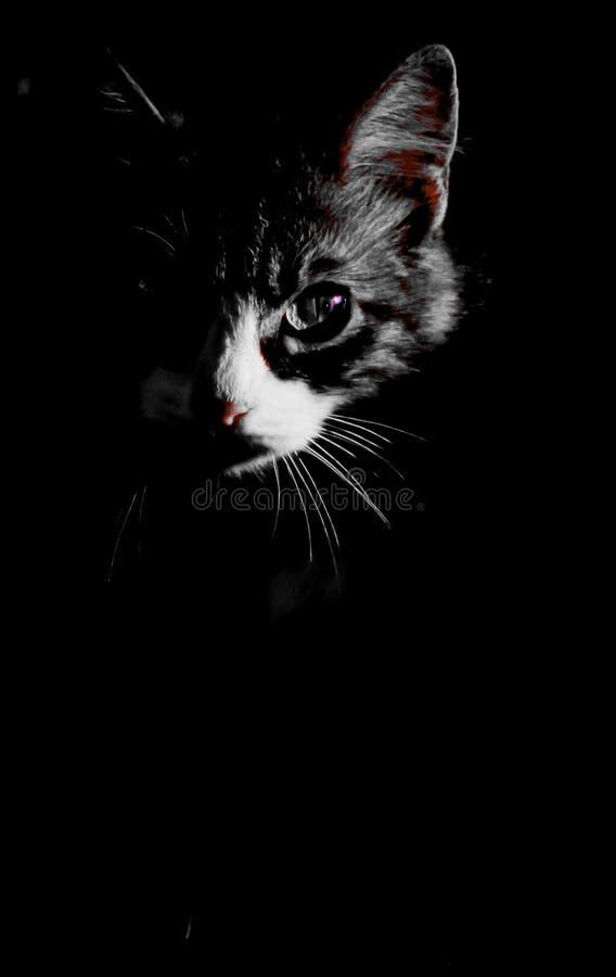 Kiciunia portret zdjęcia royalty free
