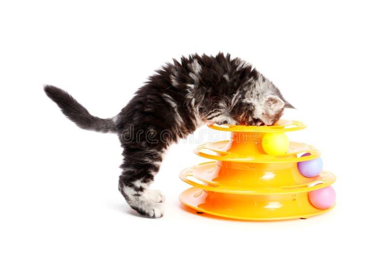 Kiciunia z zabawką dla kotów fotografia stock