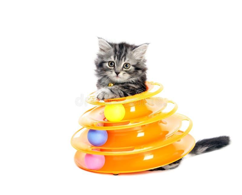 Kiciunia z zabawką dla kotów fotografia royalty free