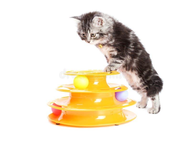 Kiciunia z zabawką dla kotów zdjęcia royalty free