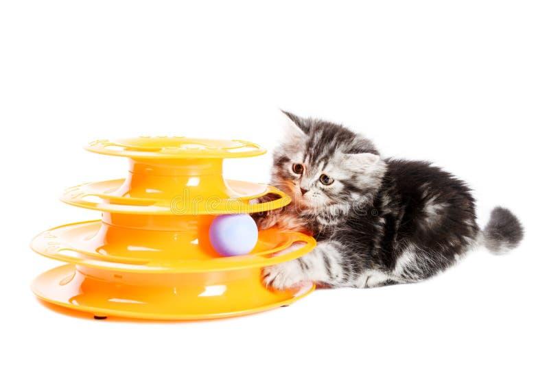 Kiciunia z zabawką dla kotów zdjęcie royalty free