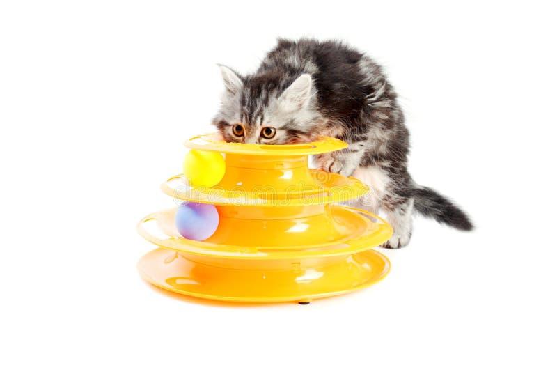 Kiciunia z zabawką dla kotów obraz royalty free