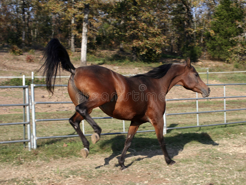 Download Kick up your heals stock image. Image of equine, animal - 3575259