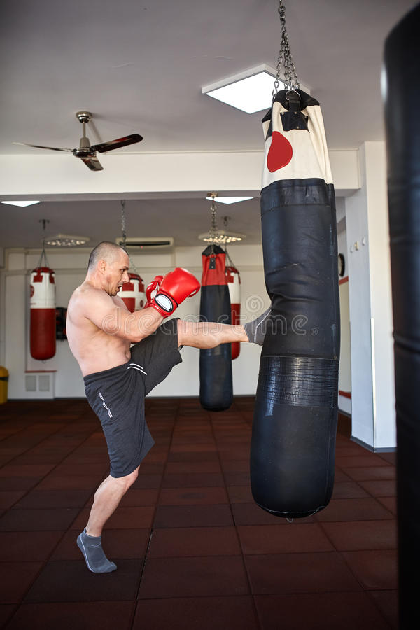 Kickbox fighter with punch bag royalty free stock images